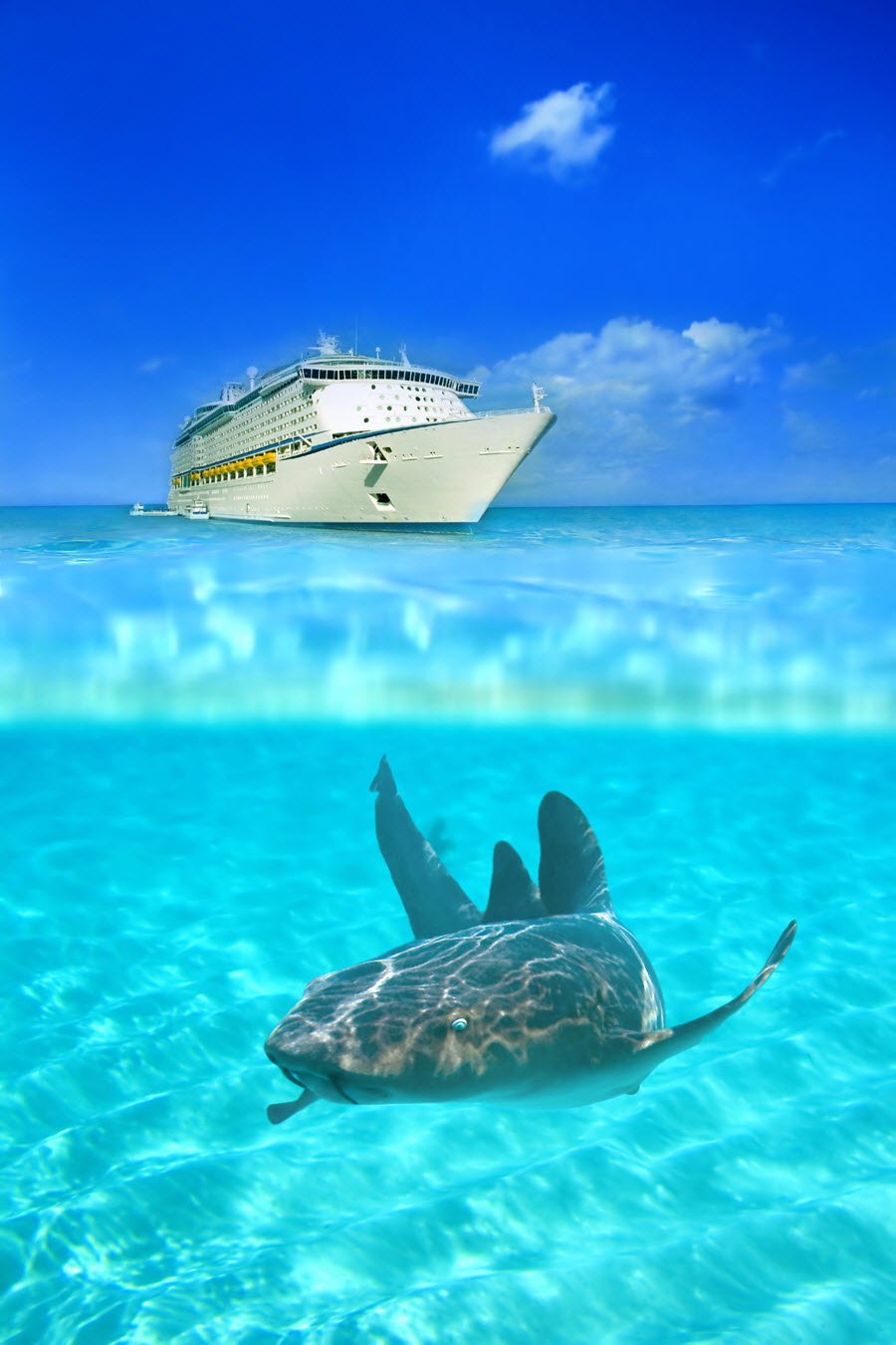 Cruise Ship behind a Nurse Shark off Grand Cayman.